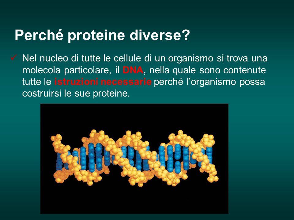 Perché proteine diverse