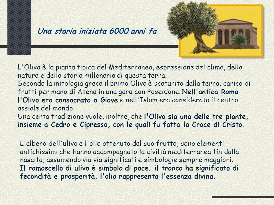 L olio di oliva ppt scaricare for Una storia a pianta aperta