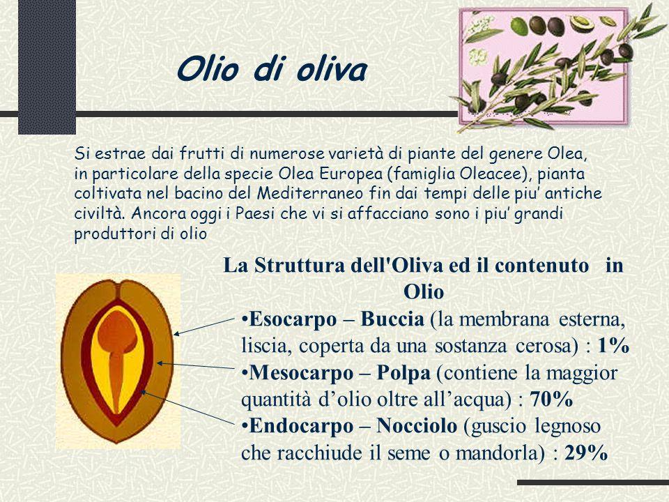 La Struttura dell Oliva ed il contenuto in Olio