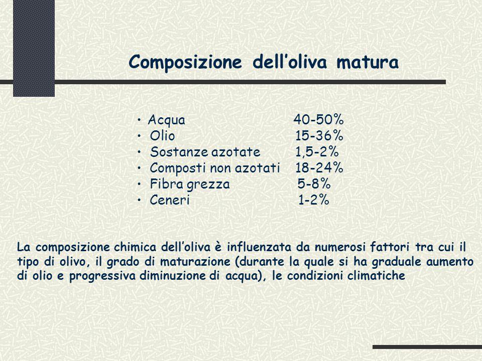 Composizione dell'oliva matura