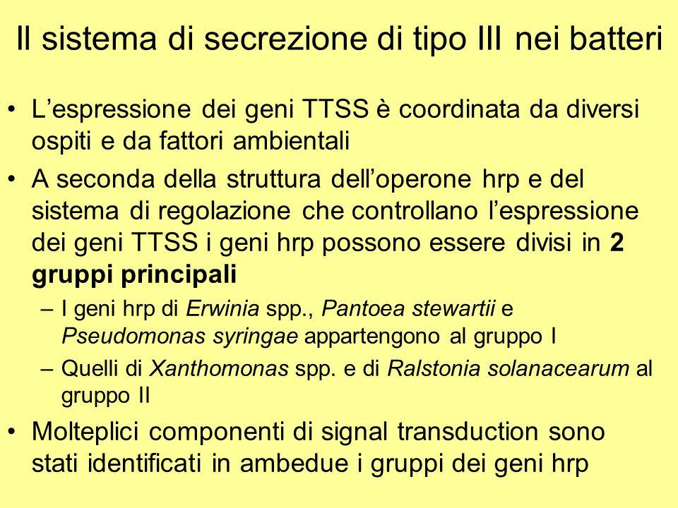 Il sistema di secrezione di tipo III nei batteri