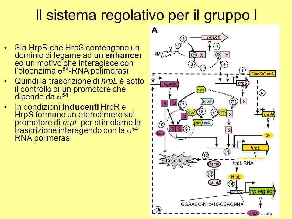 Il sistema regolativo per il gruppo I