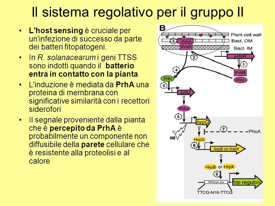 Il sistema regolativo per il gruppo II