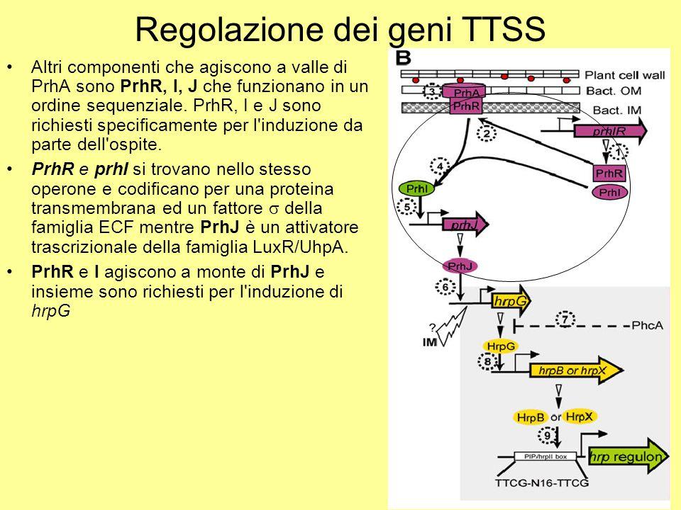 Regolazione dei geni TTSS
