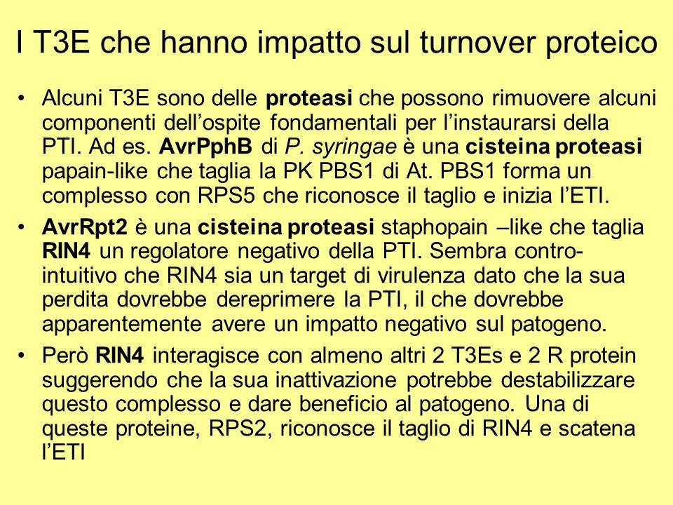 I T3E che hanno impatto sul turnover proteico