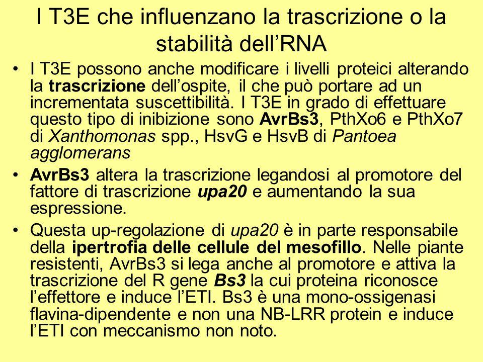 I T3E che influenzano la trascrizione o la stabilità dell'RNA