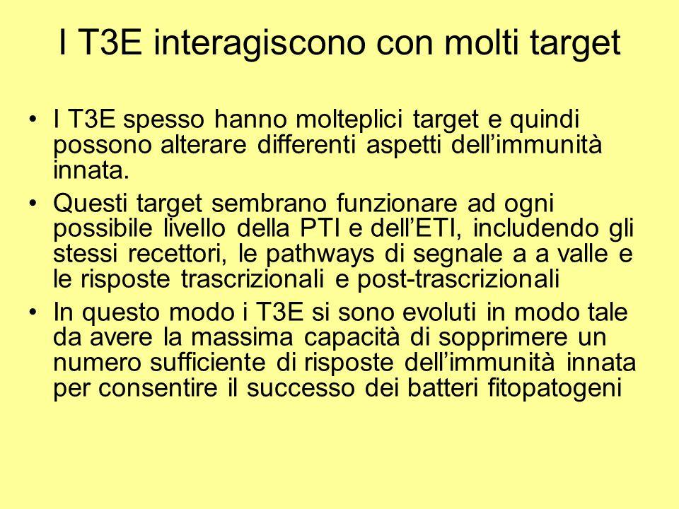I T3E interagiscono con molti target