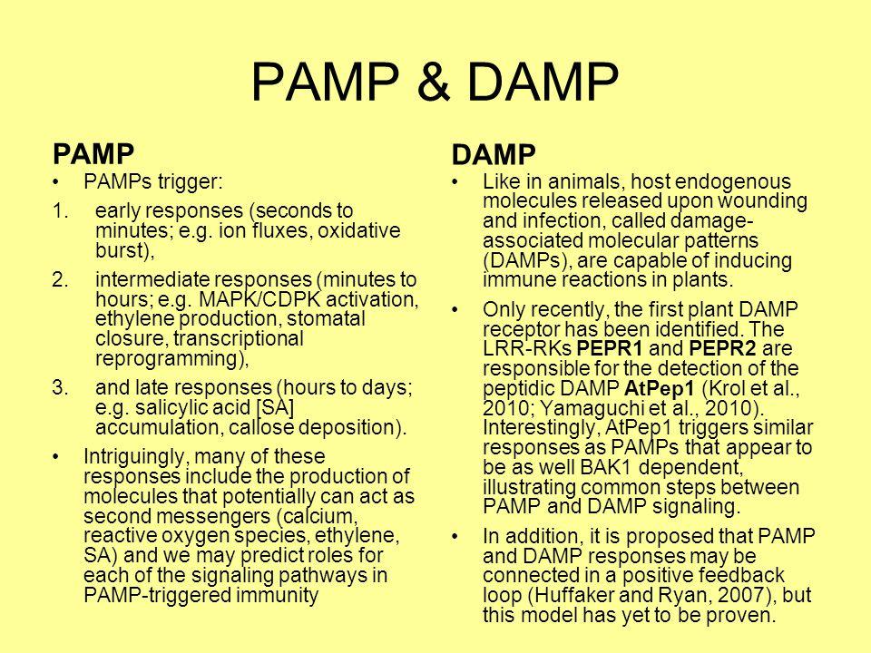 PAMP & DAMP PAMP DAMP PAMPs trigger:
