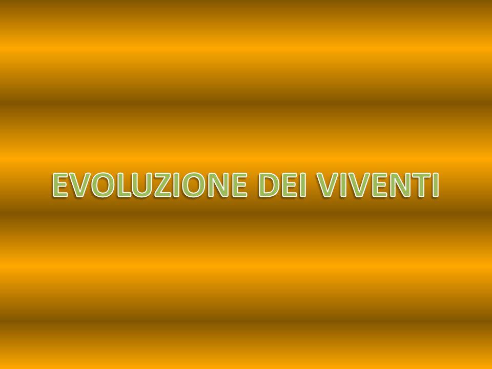 EVOLUZIONE DEI VIVENTI