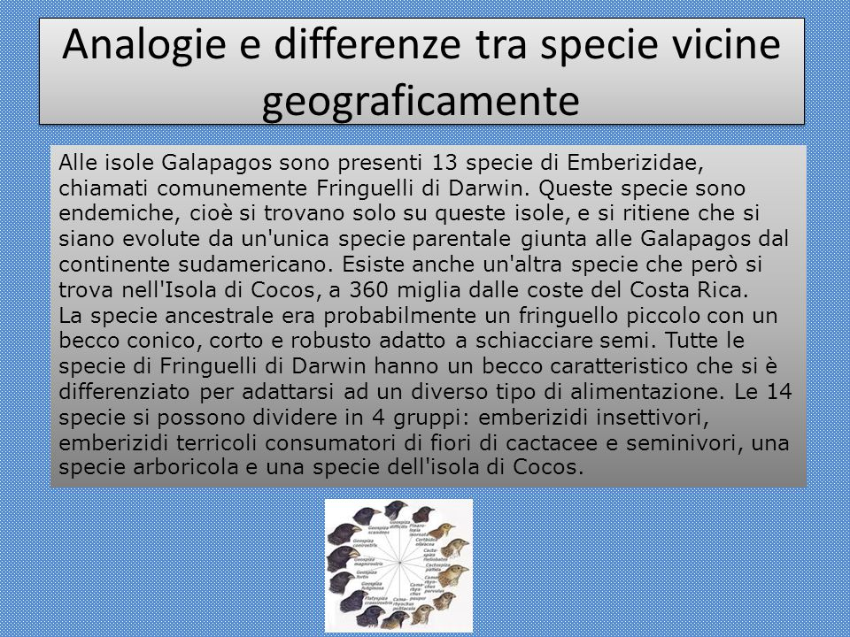 Analogie e differenze tra specie vicine geograficamente