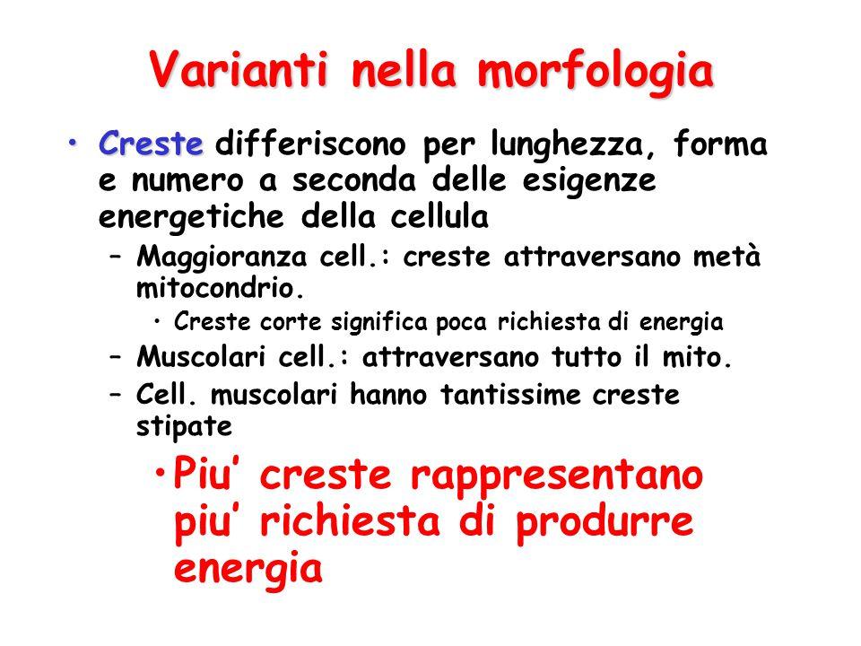 Varianti nella morfologia
