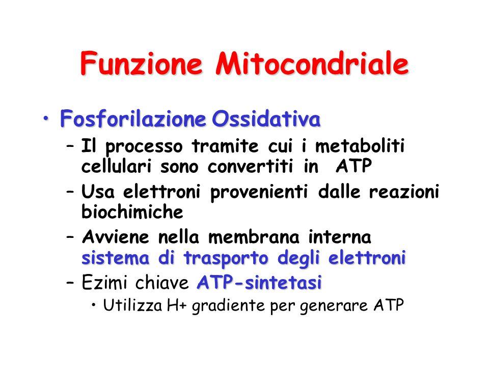 Funzione Mitocondriale