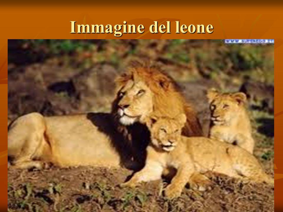 Immagine del leone