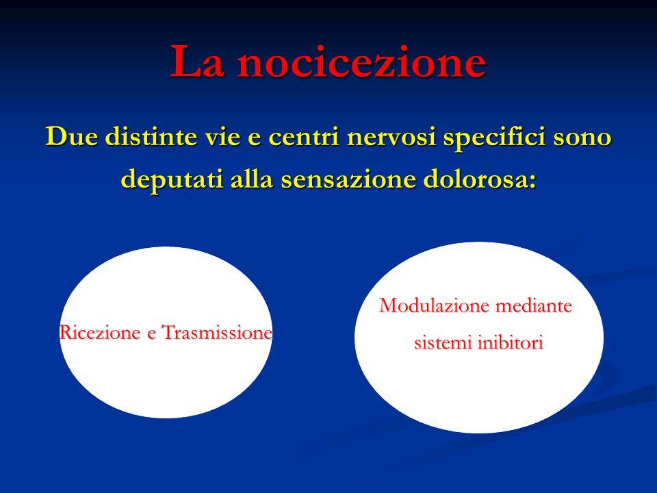 La nocicezione Due distinte vie e centri nervosi specifici sono