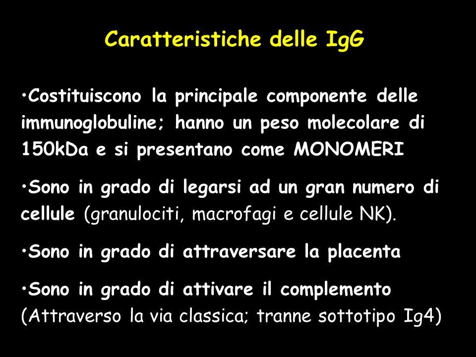 Caratteristiche delle IgG