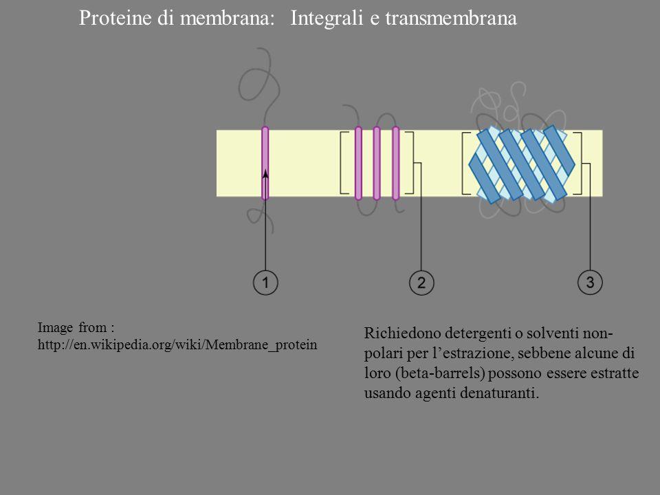 Integrali e transmembrana