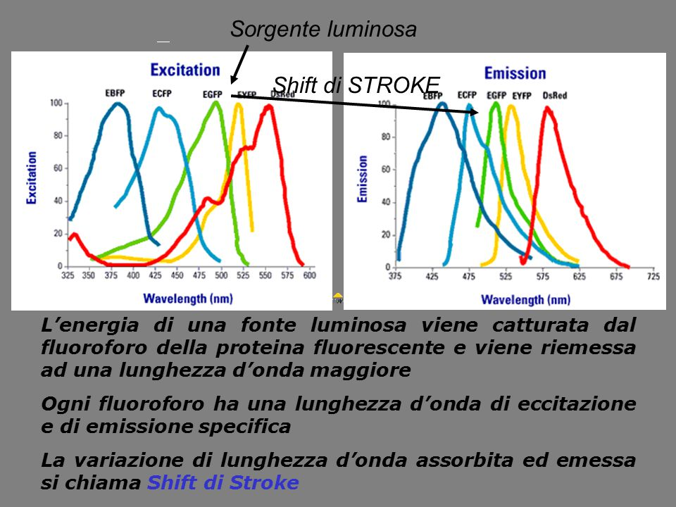 Sorgente luminosa Shift di STROKE