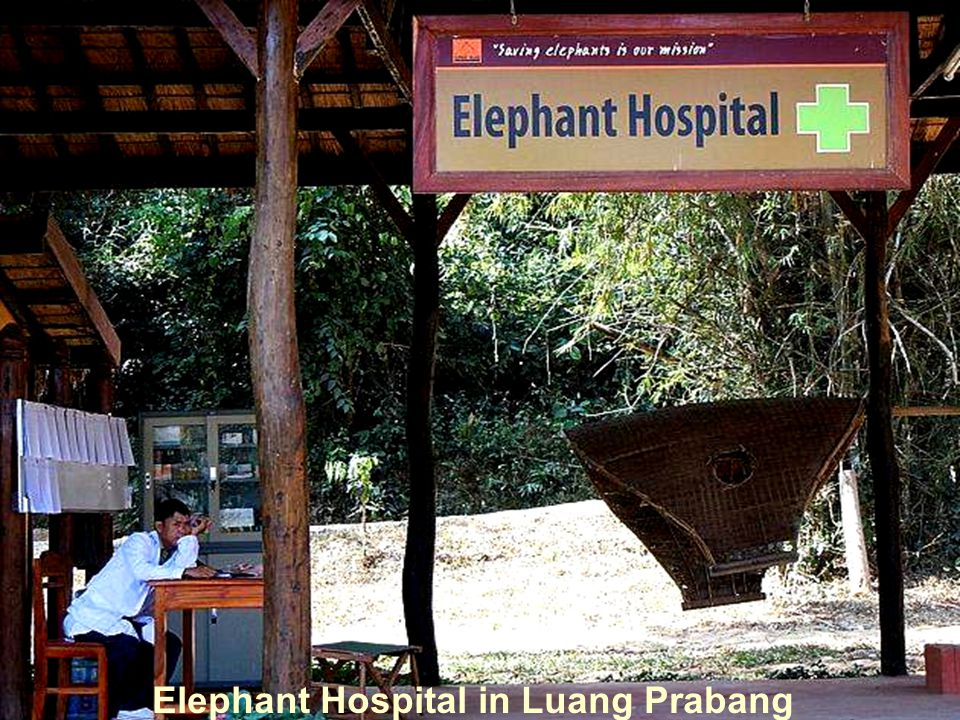 Elephant Hospital in Luang Prabang
