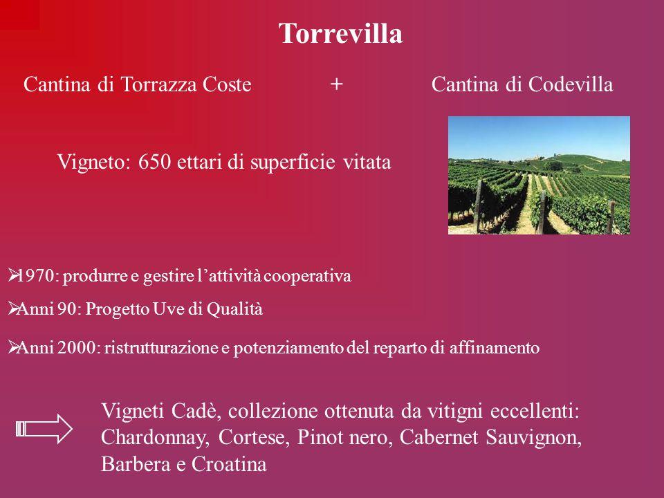Torrevilla Cantina di Torrazza Coste + Cantina di Codevilla