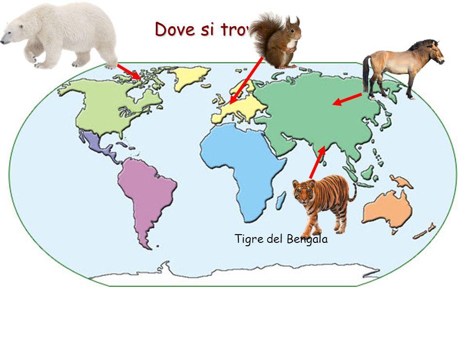 Dove si trovano Tigre del Bengala