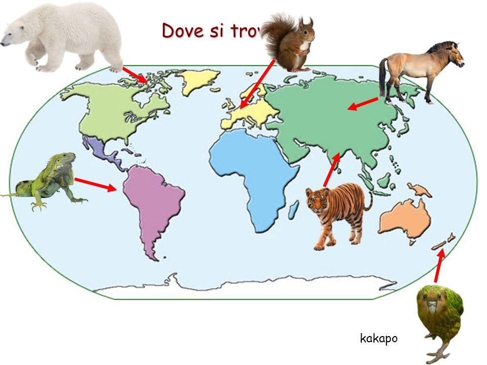 Dove si trovano kakapo