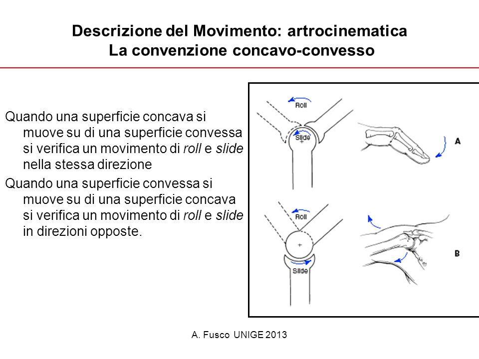 Descrizione del Movimento: artrocinematica La convenzione concavo-convesso