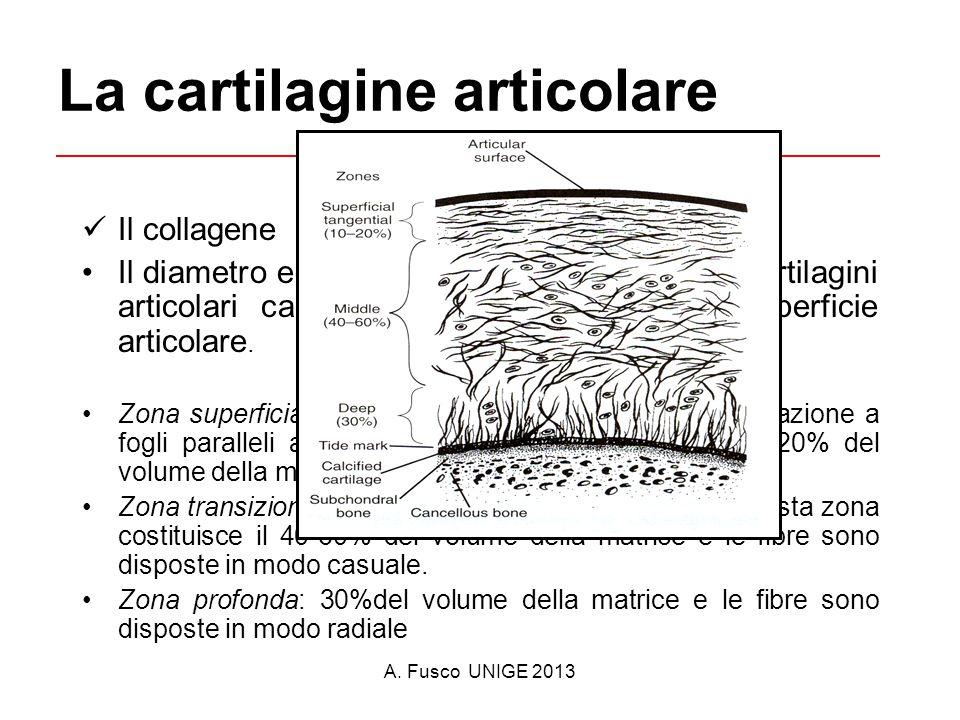 La cartilagine articolare