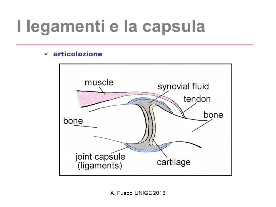 I legamenti e la capsula