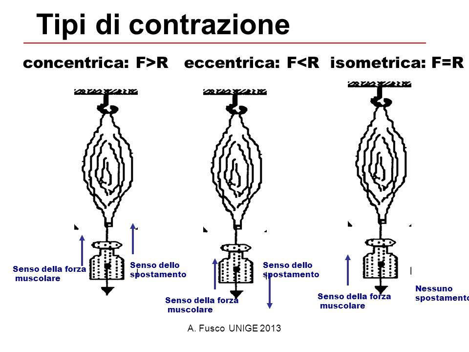Tipi di contrazione concentrica: F>R eccentrica: F<R isometrica: F=R. Senso dello. spostamento.