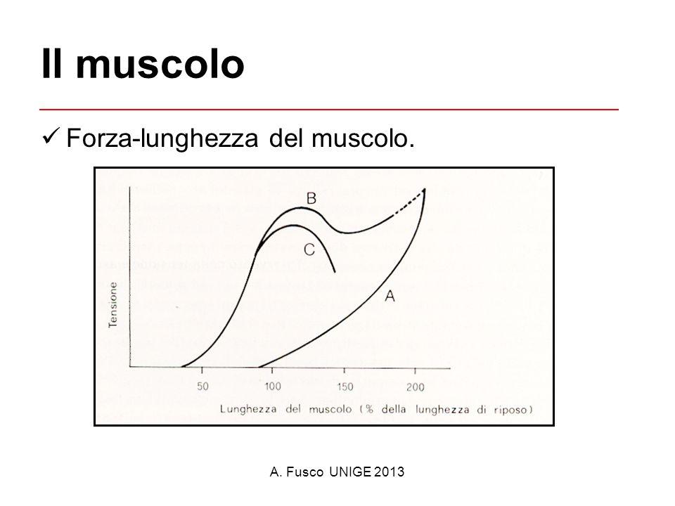 Il muscolo Forza-lunghezza del muscolo. A. Fusco UNIGE 2013