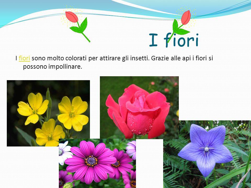 I fiori I fiori sono molto colorati per attirare gli insetti.