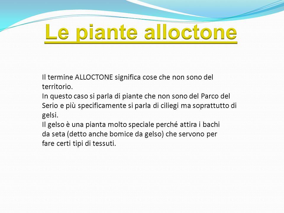 Le piante alloctone Il termine ALLOCTONE significa cose che non sono del. territorio.