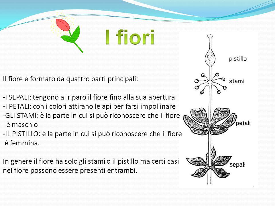 I fiori Il fiore è formato da quattro parti principali: