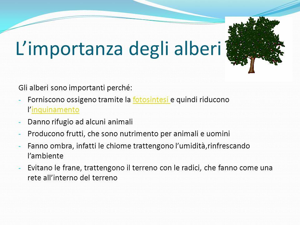 L'importanza degli alberi