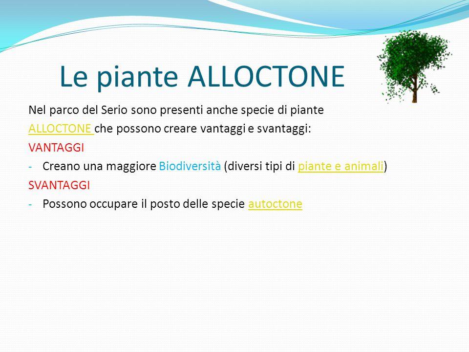 Le piante ALLOCTONE Nel parco del Serio sono presenti anche specie di piante. ALLOCTONE che possono creare vantaggi e svantaggi:
