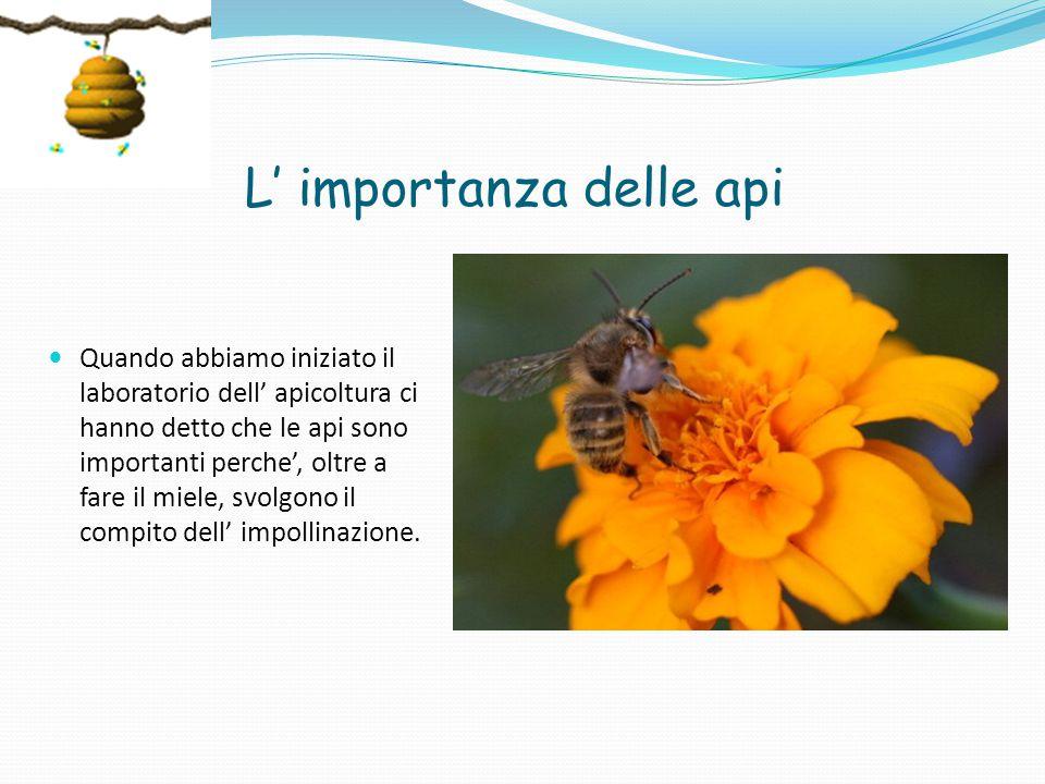 L' importanza delle api