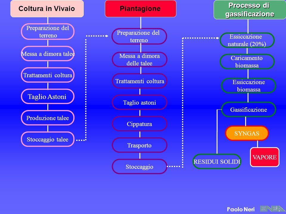 Coltura in Vivaio Piantagione Processo di gassificazione