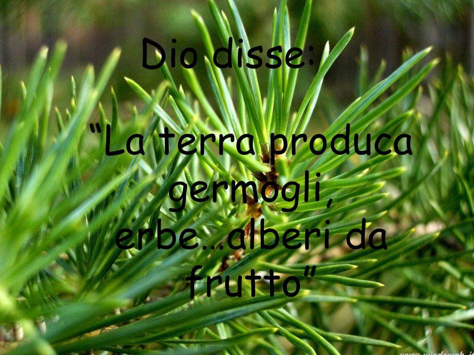 La terra produca germogli, erbe…alberi da frutto