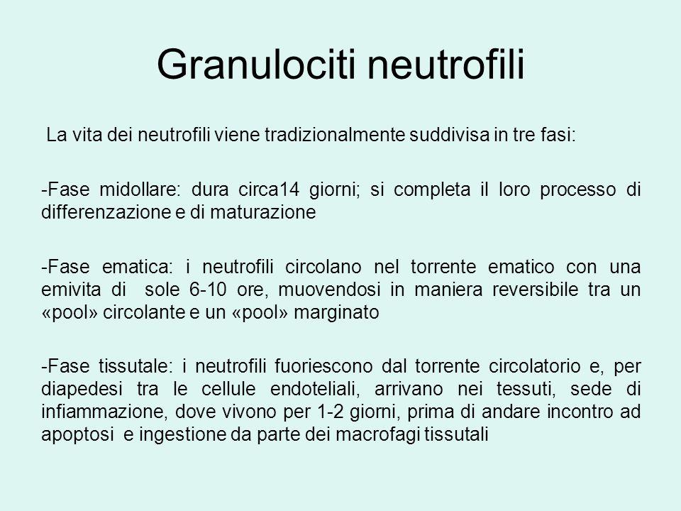 Granulociti neutrofili