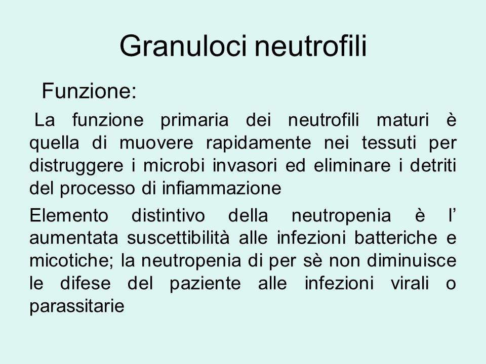 Granuloci neutrofili Funzione: