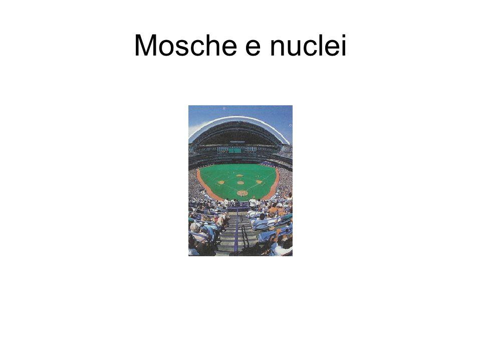 Mosche e nuclei