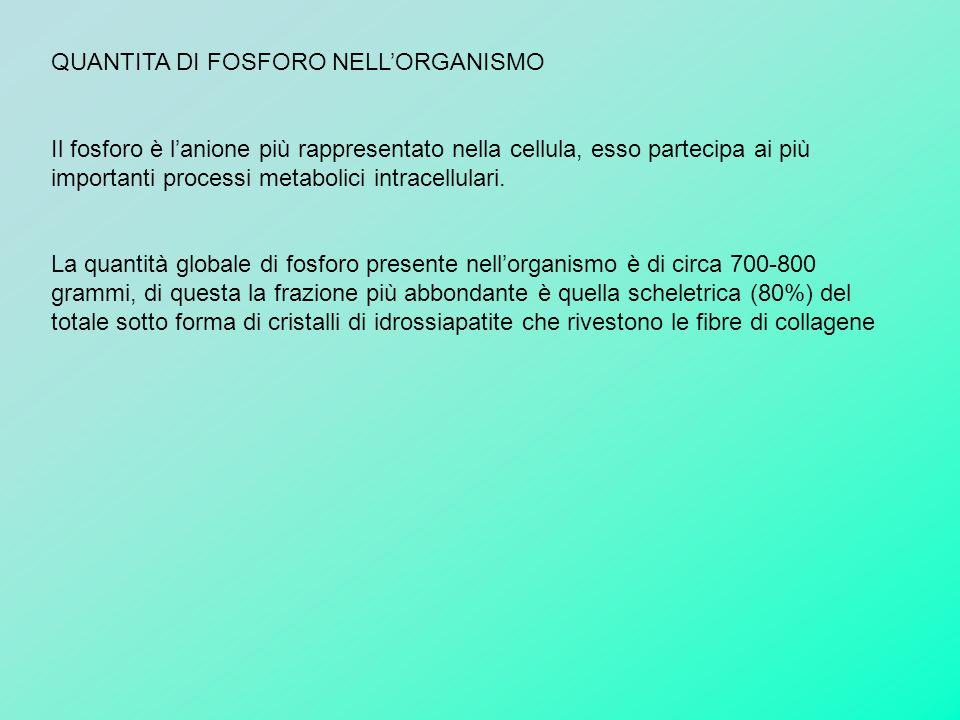 QUANTITA DI FOSFORO NELL'ORGANISMO