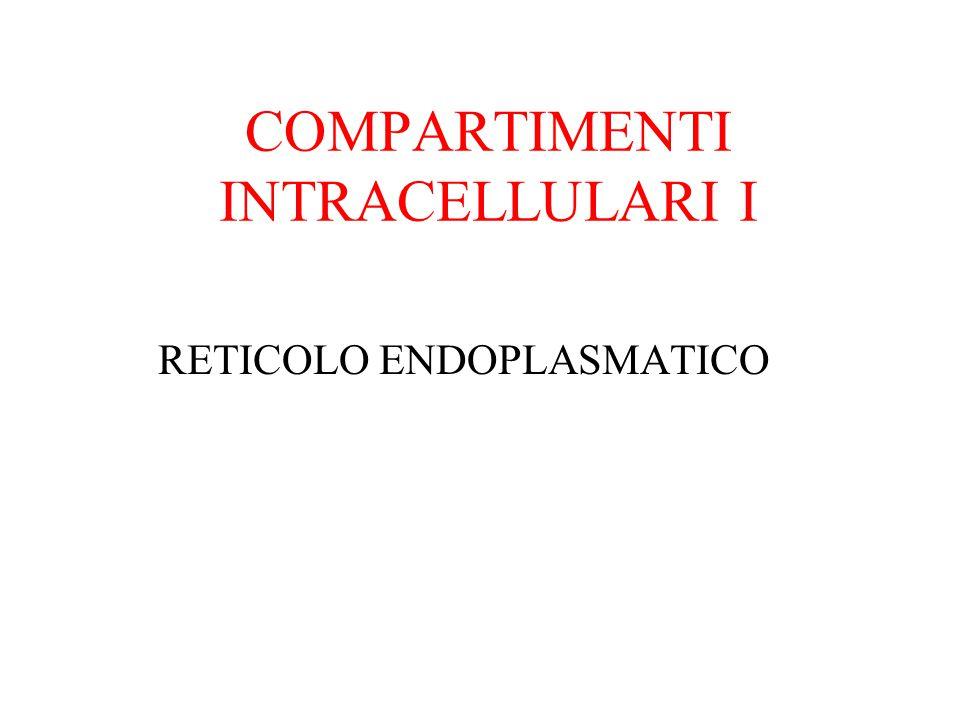 COMPARTIMENTI INTRACELLULARI I