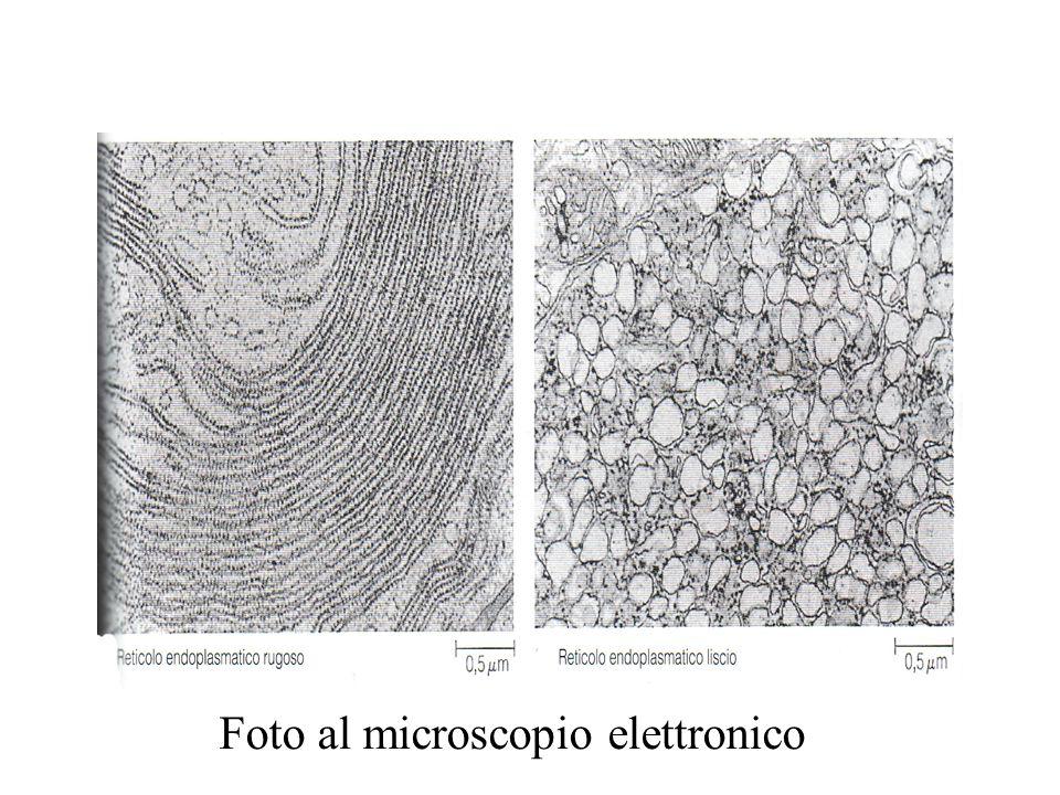 Foto al microscopio elettronico