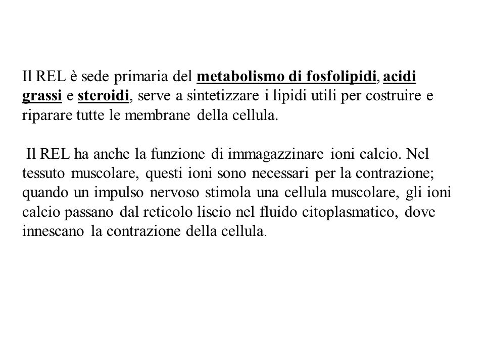 Il REL è sede primaria del metabolismo di fosfolipidi, acidi grassi e steroidi, serve a sintetizzare i lipidi utili per costruire e riparare tutte le membrane della cellula.