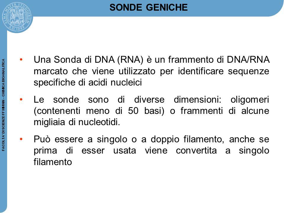 SONDE GENICHE Una Sonda di DNA (RNA) è un frammento di DNA/RNA marcato che viene utilizzato per identificare sequenze specifiche di acidi nucleici.