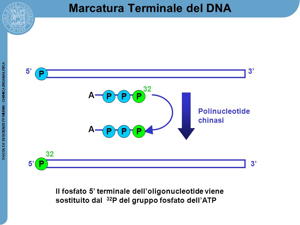 Marcatura Terminale del DNA