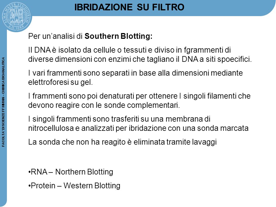 IBRIDAZIONE SU FILTRO Per un'analisi di Southern Blotting: