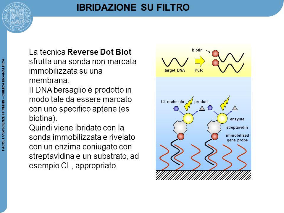 IBRIDAZIONE SU FILTRO La tecnica Reverse Dot Blot sfrutta una sonda non marcata immobilizzata su una membrana.