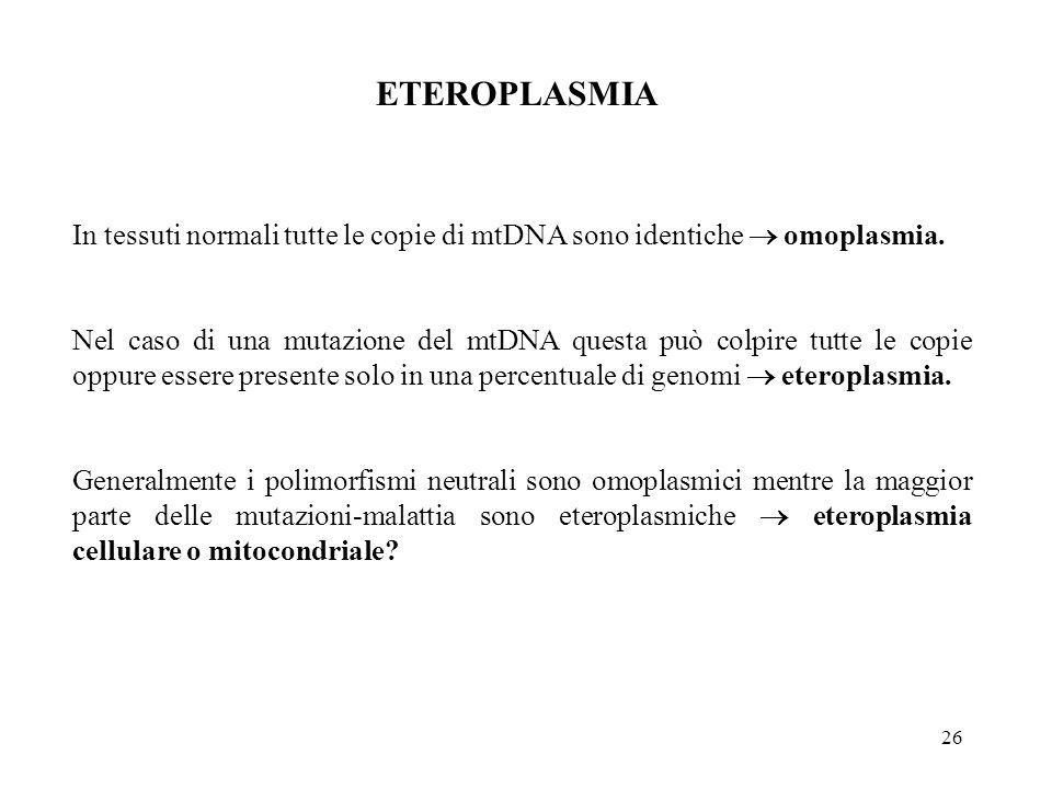 ETEROPLASMIA In tessuti normali tutte le copie di mtDNA sono identiche  omoplasmia.